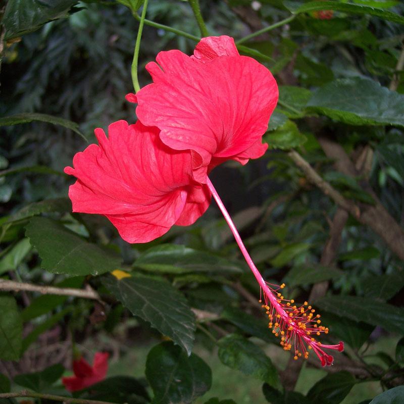 Flower from our garden in Chennai