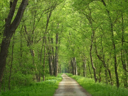 Green Trails in Spring