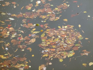 Fallen leaves at Rileys Lock