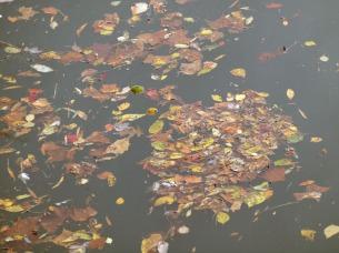 Fallen leaves at Rileys Lock